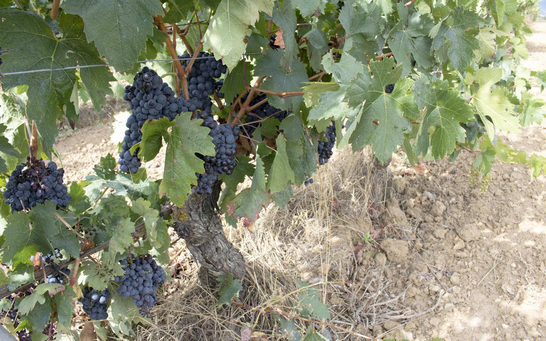 Nuestras bodegas en Rioja Alavesa bajo el influjo de la sierra de Cantabria